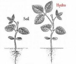 Soil vs hydro