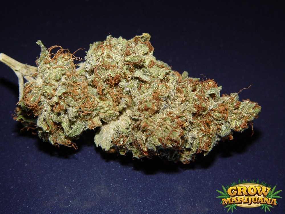Afghan Kush Seeds Strain Review Grow Marijuana Com