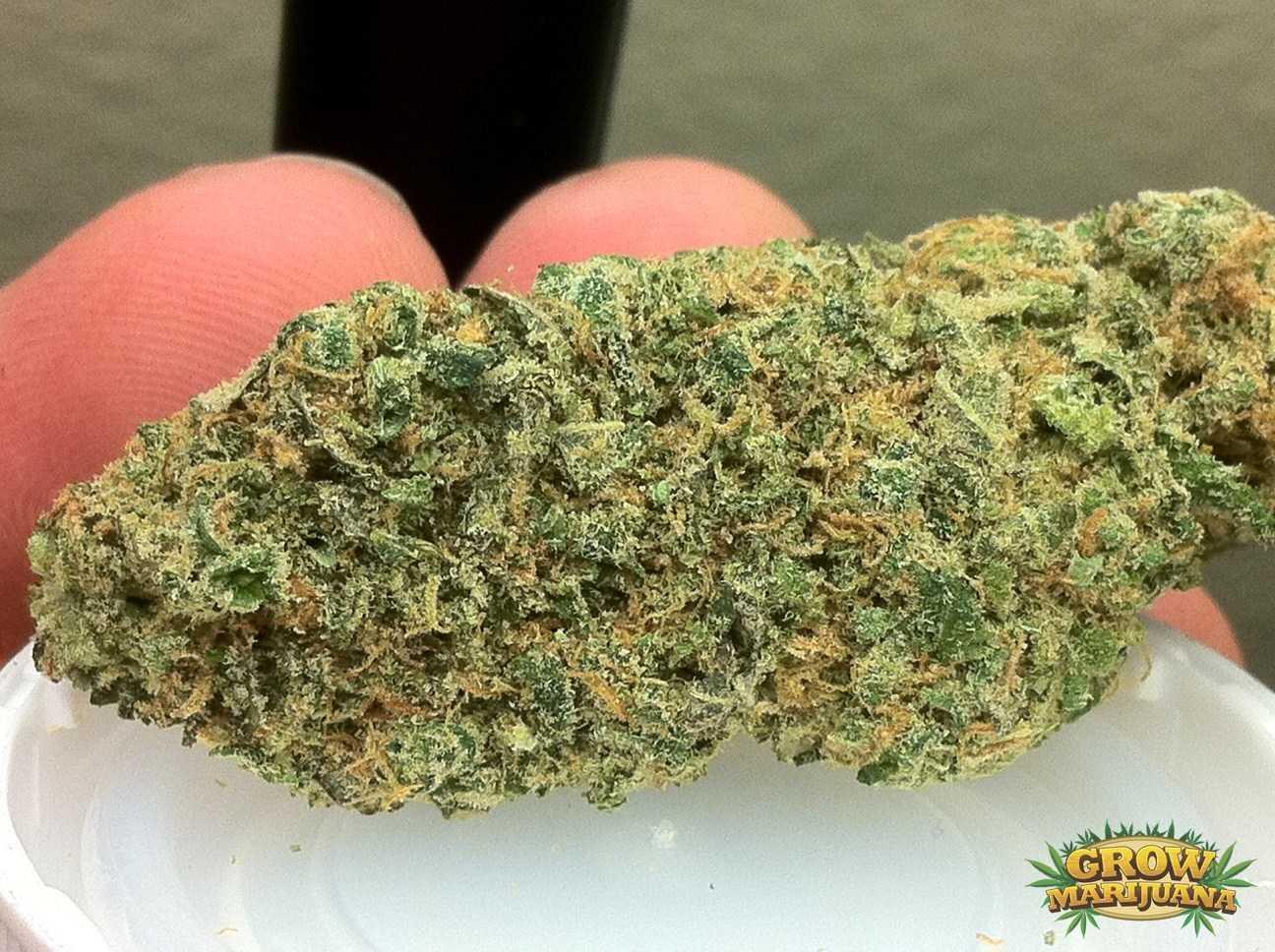 cheese marijuana