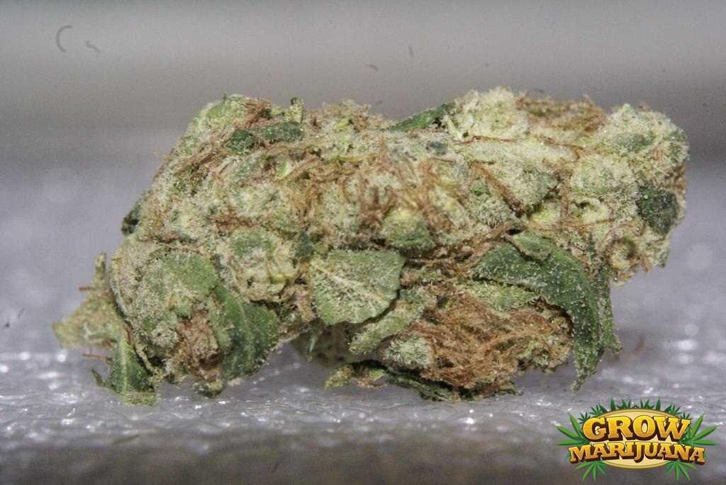 endless sky seeds   strain review grow marijuana