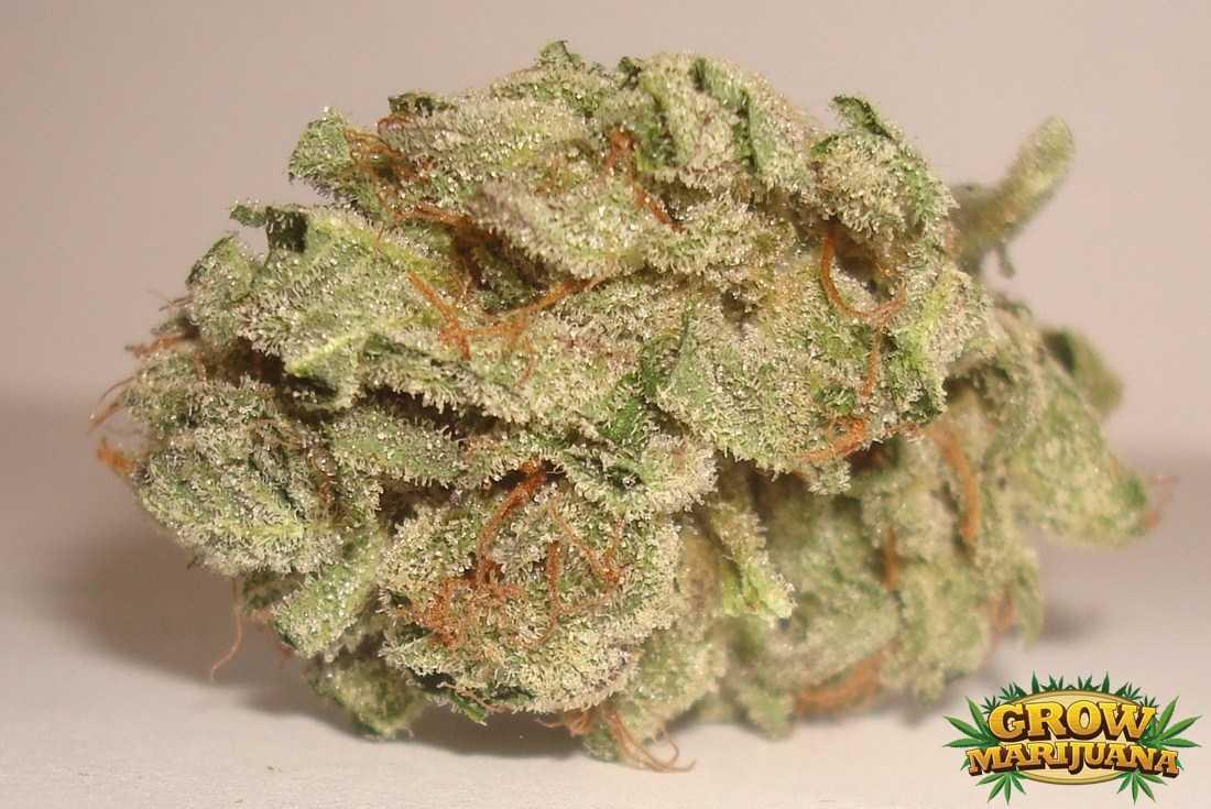 Energy Haze Seeds Strain Review Grow Marijuana Com