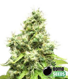 Medi-Bomb-1