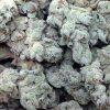 OG Kush Auto Marijuana Strain by Dr krippling