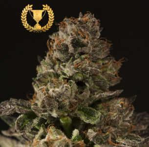 Strawberry-Sour-Diesel-Feminized-marijuana-seeds