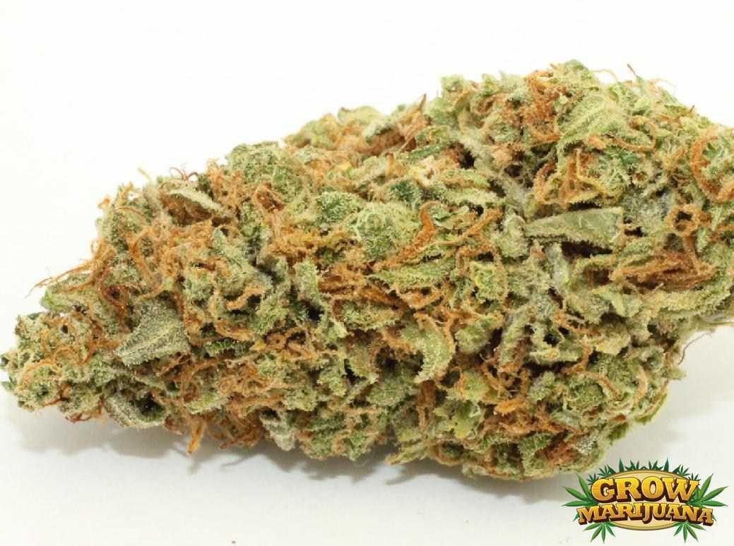 how to choose marijuana strain