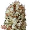 extreme-impact-auto-marijuana-strain