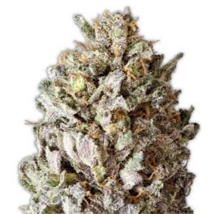 heavyweight-diesel-drift-marijuana