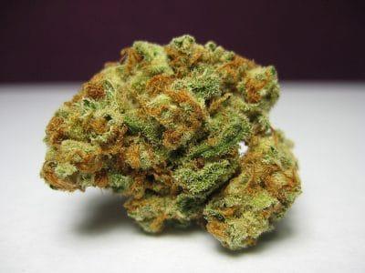 Lambs Bread marijuana strain
