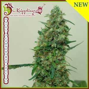 patel-s-cornershop-special-dr-krippling-marijuana